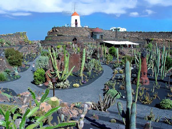 jardn de cactus vista general